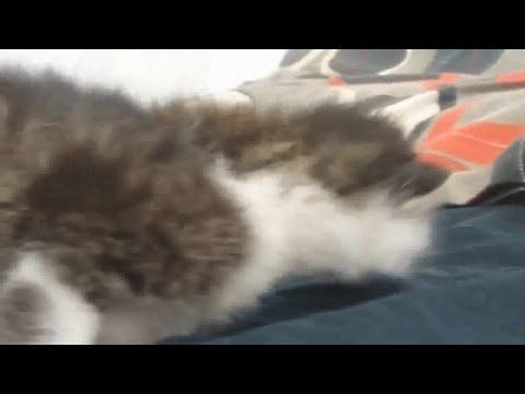 Funny Videos 2014 - Funny Cats Video - Funny Cat Videos Ever - Funny Animals Funny Fails 2014 - http://positivelifemagazine.com/funny-videos-2014-funny-cats-video-funny-cat-videos-ever-funny-animals-funny-fails-2014-44/ http://img.youtube.com/vi/8o33LcuM1Yw/0.jpg  Funny Videos 2014 – Funny Cats Video – Funny Cat Videos Ever – Funny Animals Funny Fails 2014 Funny Videos 2014 – Funny Cats Video – Funny Cat Videos … Judy Diet Programme ***St