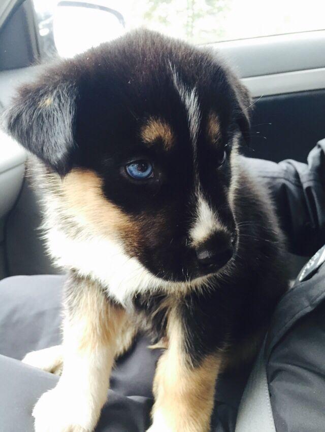abbastanza 481 best Doggies >> Pretty Mutts images on Pinterest | Doggies  ZM24