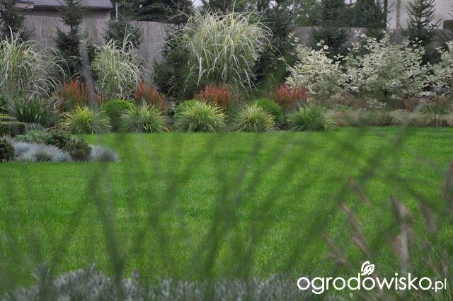 Lawendowy zawrót głowy - strona 1383 - Forum ogrodnicze - Ogrodowisko