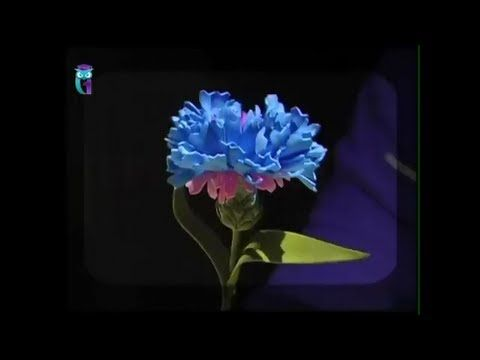 Make flower-cornflower from foamiran (spongy rubber). Diy. Handmade - https://www.youtube.com/watch?v=dcby20Z2GGM