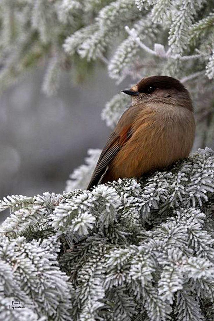 beautiful bird winter ndash - photo #36