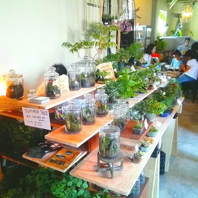 キャプション→おはようございます☀  本日は、全品30-50%オフの#サマーセール 価格で、大阪西区本田#cafe47 にて出店しています! ウチの他にも、石鹸屋さんやキャンドル、焼き菓子など楽しめるアイテム盛りだくさんです。 #堀江 からも自転車で10分くらいで来られますのでよろしくお願いしますー!  #本田マルシェ#bonsai#bonsailabo#盆栽#ミニ盆栽#苔#コケ#テラリウム ユーザー→miyazatorintaro