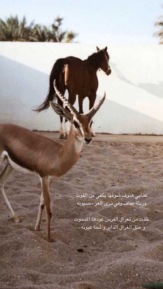 Pin By Lastgrape On Quotes In 2021 Quotes For Book Lovers Beautiful Arabic Words Horse Love