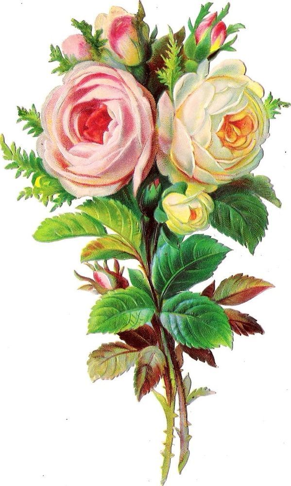 Oblaten Glanzbild scrap die cut chromo Rose  15 cm Blume flower