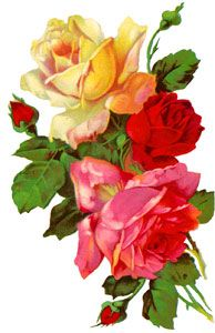 Valentine Roses - Image 5: