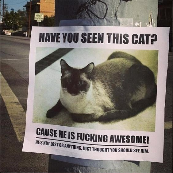 Missing Pet Template Best How To Find A Lost Dog Images On - 20 hilarious lost pet signs