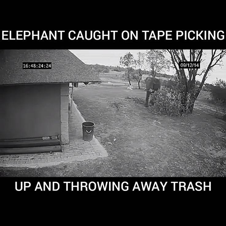Elefant gefangen auf dem Band, das Abfall aufhebt und wegwirft   – Für später merken