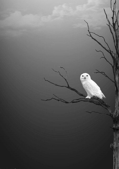 """The crow wished everything was black, the owl, that every thing was white."" ""El cuervo quisiera que todo era negro, el búho, que todo fuese blanco."" Esto esta genial Pinterest.Connection( Photo, GrayScale );"