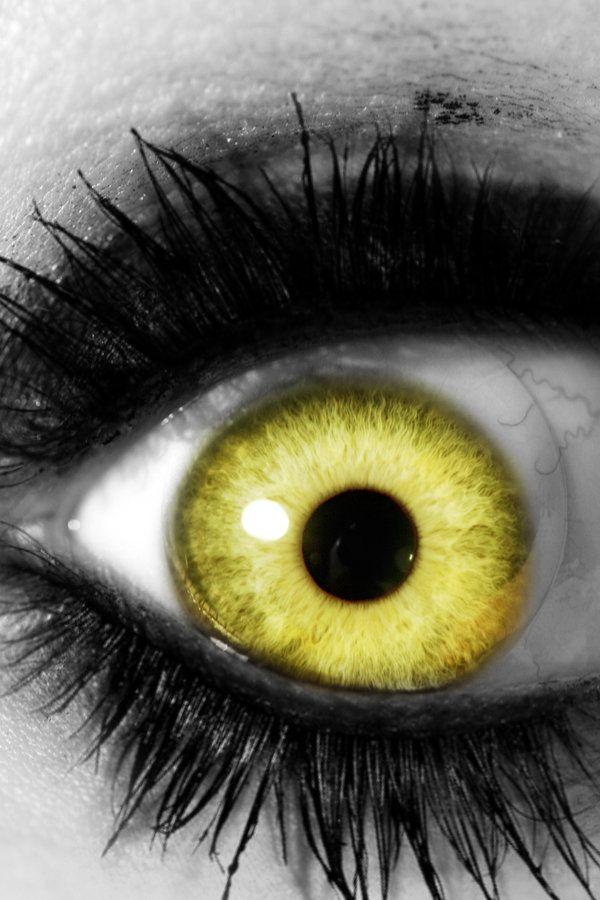 yellow eyes - photo #40
