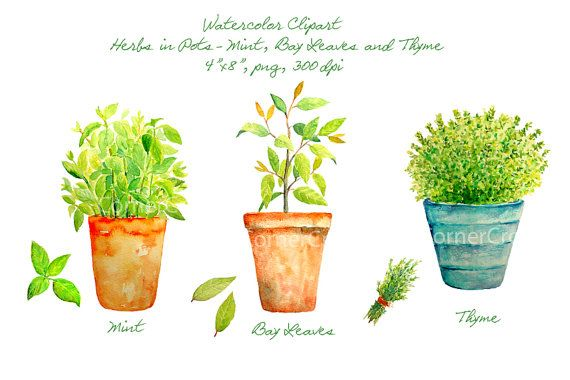 Watercolor clipart - Hand painted watercolor herbs in terracotta pots - mint, bay leaves and thyme printable instant download