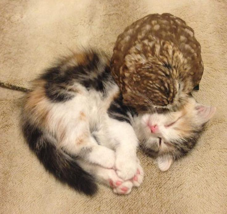 Best Meow Images On Pinterest Basket Funny Animals And - Owlet kitten meet coffee shop become best friends