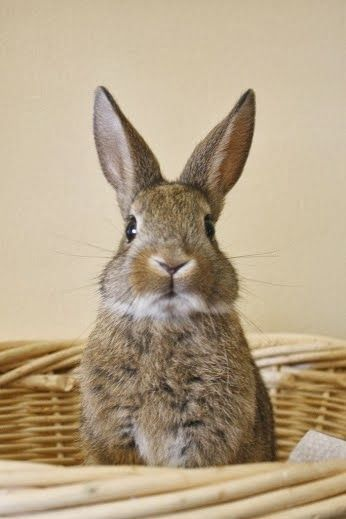 Whats that you say? You bought me timothy hay from https://rabbitholehay.com ? More