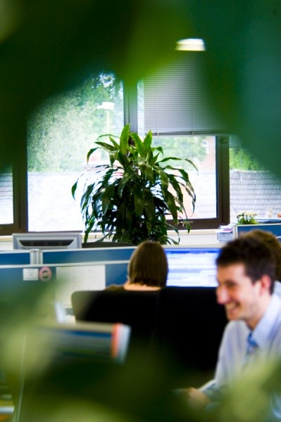 office greenery. office greenery making an andover look and feel much better