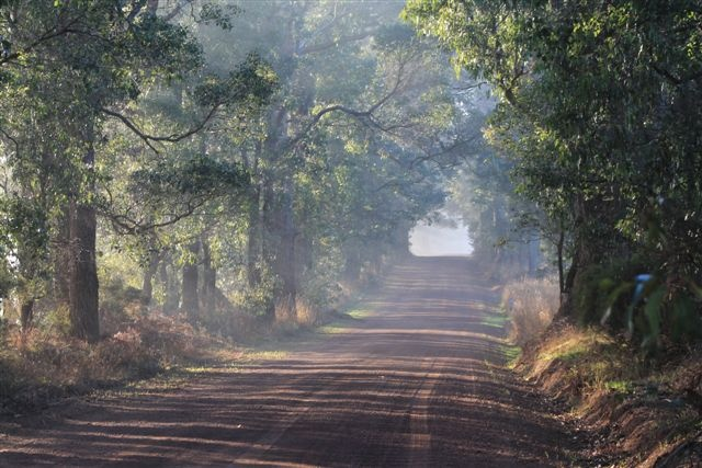 Early morning at Manjimup, Western Australia...Taken by Daphne Greenhow
