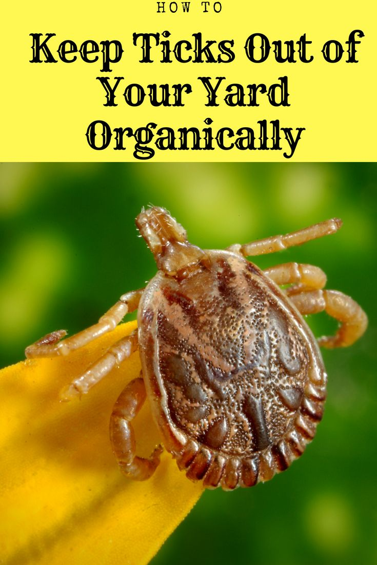 How To Keep Ticks Out Of Your Yard And Garden Ticks Natural