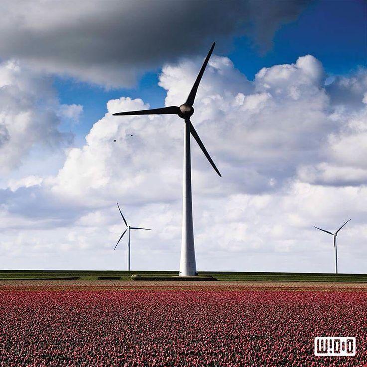 Plus Pourquoi aller sur Kepler 186f ? Nous avons fait des erreurs sur notre Terre et nous en payons aujourdhui le prix.  Chez Whoo nous avons à cœur de créer une société durable et d'améliorer le quotidien de la population. Cest pourquoi une équipe darchitectes travaille sur la réalisation de la 1ere ville 100 % énergies propres sur Kepler 186f ! Rejoignez-nous et devenez vous aussi acteur de cette révolution du 21e siècle  #greenenergy #ecology #future #avenir #eolienne #innovation…