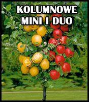Drzewa owocowe kolumnowe, karłowe i duo