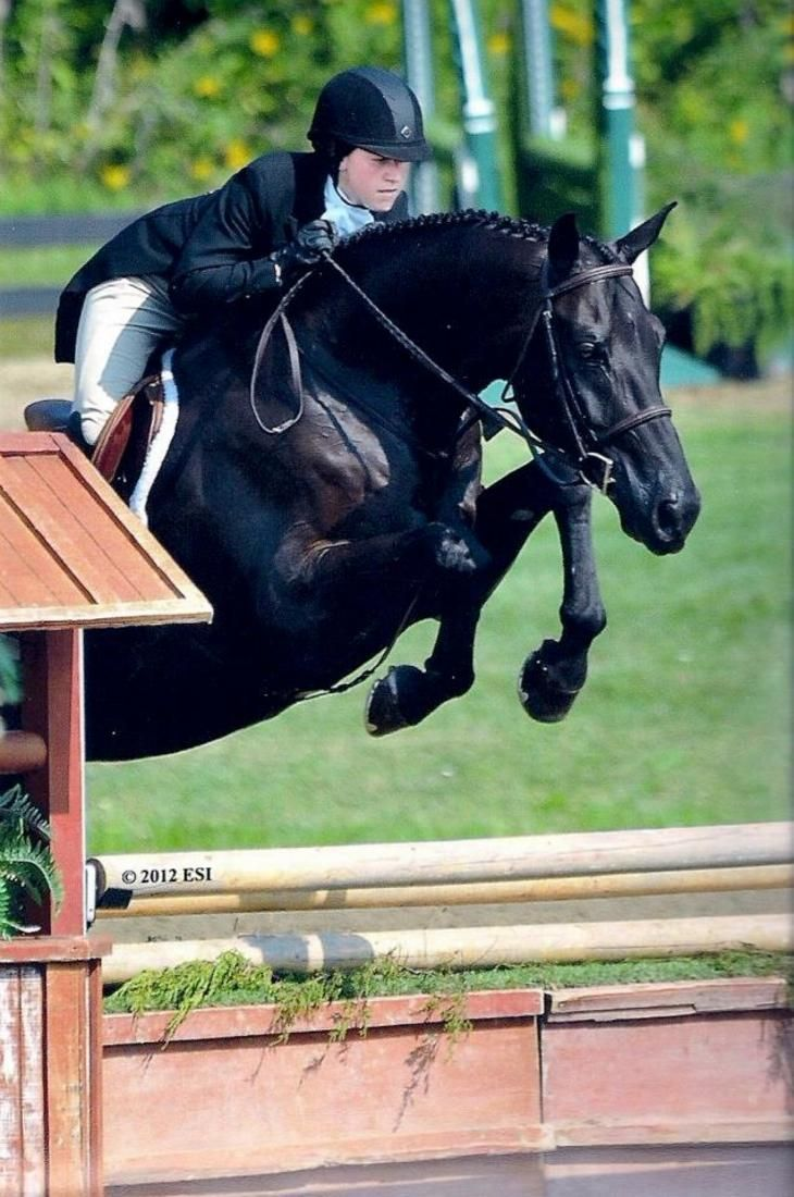 Rosso Rossini - German Warmblood - Hunter Horse For Lease