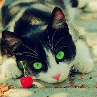Vivir con gato. Descubre el significado del comportamiento de tu gato