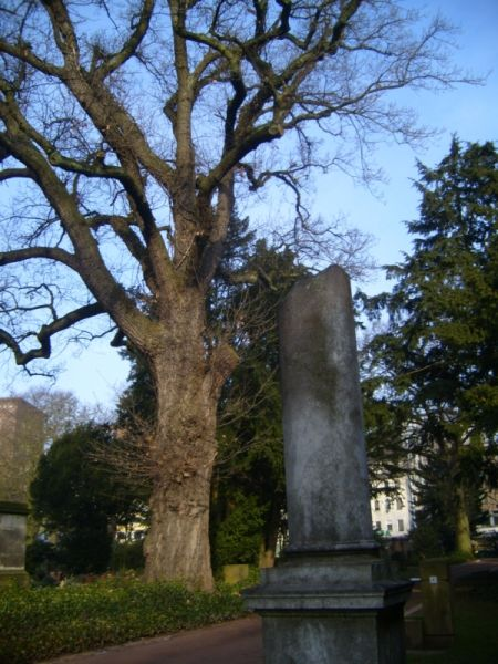 Eiche Alter Friedhof; Ort: Alter Friedhof am Jahnplatz (Friedrich-Ebert-Str…