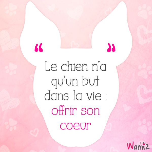 Le chien n'a qu'un but dans la vie : offrir son coeur ------ A dog has one goal in life : to offer his heart