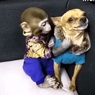 GIF I'm still mad at you. Give me some space. Enjoy RUSHWORLD boards, LULU'S FUNHOUSE, BARK RUFFINGTON'S DOG KINGDOM and UNPREDICTABLE WOMEN HAUTE COUTURE. Follow RUSHWORLD! We're on the hunt for everything you'll love! #FunnyAnimals #HilariousGif #FunnyDogs