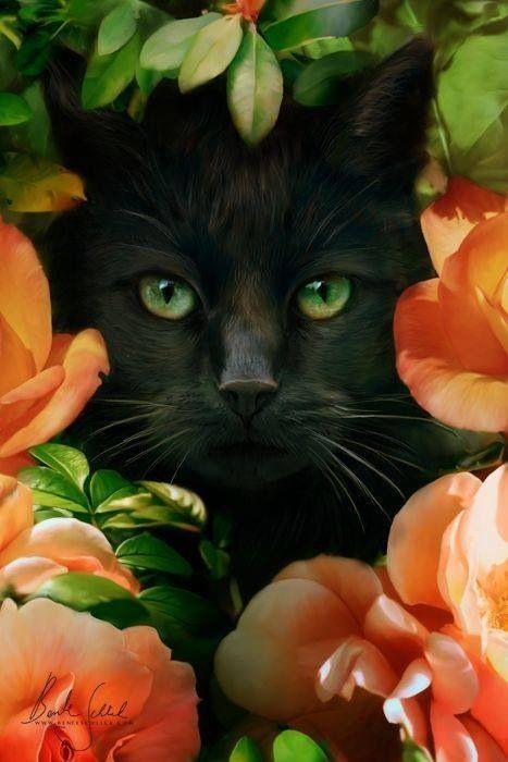 Flower Kitten <3