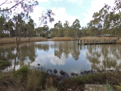 Urrbrae Wetlands, home to many native plants and water birds. Adelaide, South Australia.