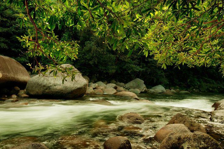 Mossman Gorge - Bushwalking
