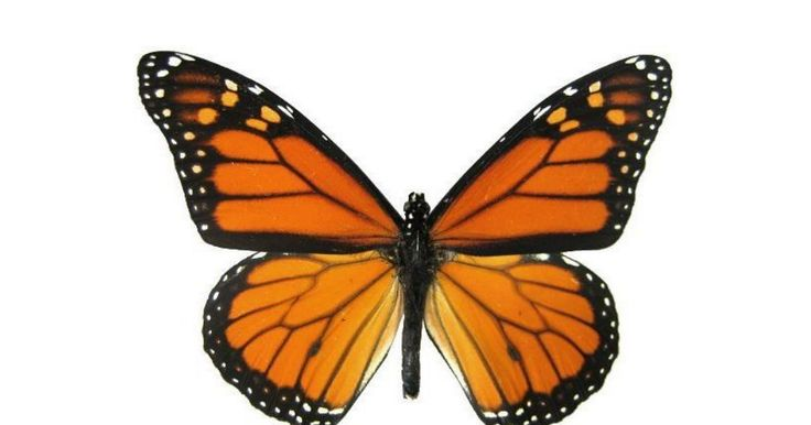 Montessori Inspired Butterflies Mobile Monarch Butterfly Tattoo