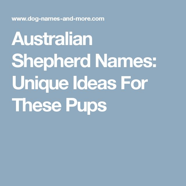 Australian Shepherd Names: Unique Ideas For These Pups