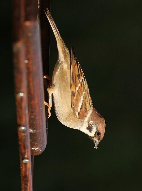 Pospolite ptaki też są piękne - http://janadamski.eu/2015/08/pospolite-ptaki-tez-sa-piekne/