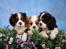 roztomilé psi