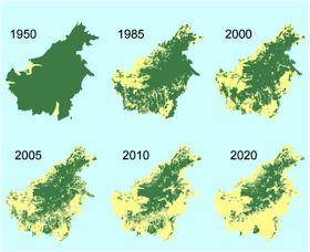 Indonesië exporteerde in 2008 bijvoorbeeld 18,6 miljoen meer kubieke meter hout dan in het jaar 2000. Dit hout zou van legale plantages afkomstig zijn. Maar nadat deze plantages onderzocht werden, bleken de meeste nep te zijn. Regenwoudgebieden, waar het meeste hout gekapt wordt, liggen in de Amazone, Centraal-Afrika en Zuidoost-Azië. In Borneo zijn grote delen van het tropisch regenwoud inmiddels weggevaagd.