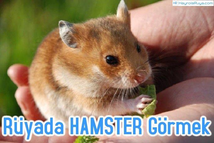 Rüyada Hamster Görmek hamster görmek öldürmek yakalamak yemek ısırması yavrusu beslemek ısırması yavru hemstırın ısırdığını görmek hamsterdan korkmak kafeste hamster kovalamak fare ısırması