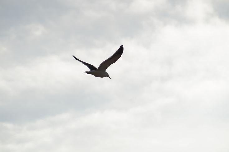 Aves del Litoral Central