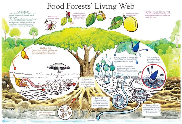 """Backyard Abundance, an environmental education non-profit organization, has released an open-source document on how to create your own """"food forest"""" through what is called, Edible Agroforestry. Backyard Abundance says this about their pdf document """"Edible Agroforestry Design"""": Agroforestry is the combination of crops (plants, animals, fungi) and trees in forest-inspired agricultural systems that benefit human…"""
