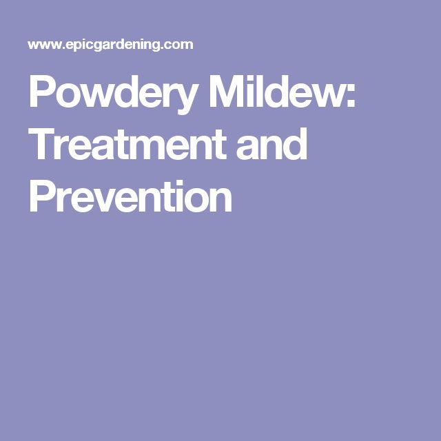 Powdery Mildew: Treatment and Prevention