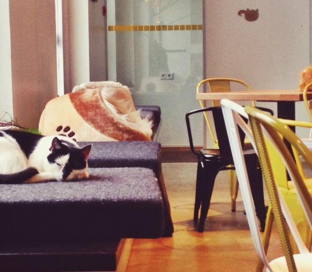 Kissakahvila Nurrissa voit nauttia salaattia, pastaa ja makeita herkkua teen ja kahvin kera. Ruokalistalla on myös lasten suosikkeja. Samalla voit seurata paikassa asustavien 8-10 kissan elämää. Ne kuljeskelevat vapaina asiakkaiden iloksi. Paikkaan on muutamien eurojen pääsymaksu. Lapset 19 ikävuoteen saakka pääsevät Nurriin ilmaiseksi. #catcafe #catlife