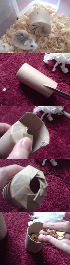 Small Pets DIY... This D.I.Y 'Christmas Cracker' toy is such a good idea to combine recycling, chewing and foraging for small pets!