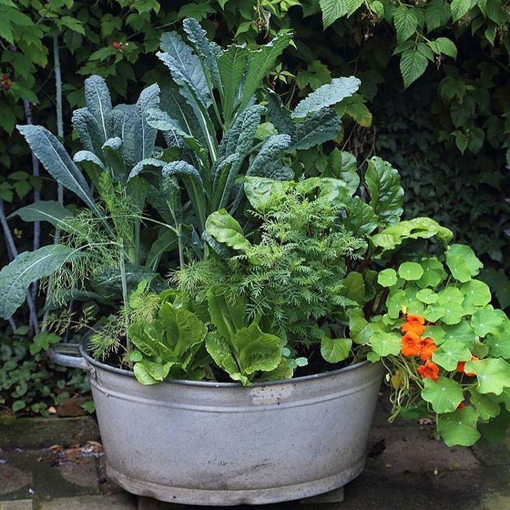 25 beste idee n over tuinieren in potten op pinterest het planten van bloemen groenten - Groenten in potten op balkons ...
