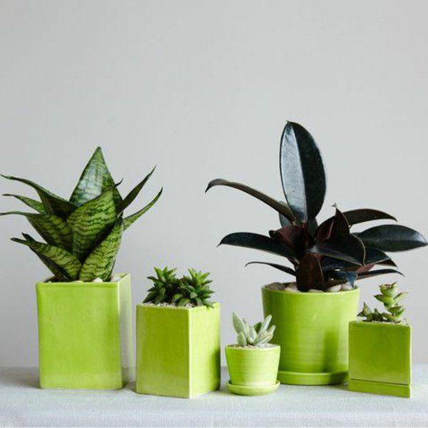 die besten 25 bl hende zimmerpflanzen ideen auf pinterest. Black Bedroom Furniture Sets. Home Design Ideas