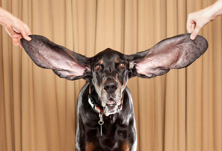 уши - Поиск в Google