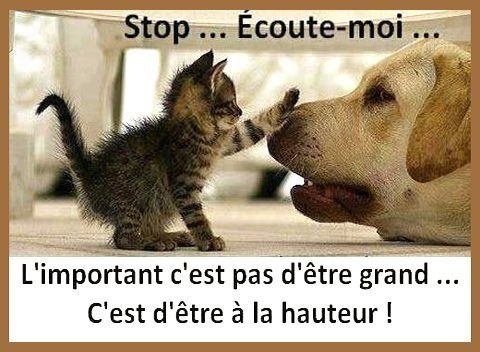 Stop and listen to me Tais toi et écouté Discussion chat et chiens