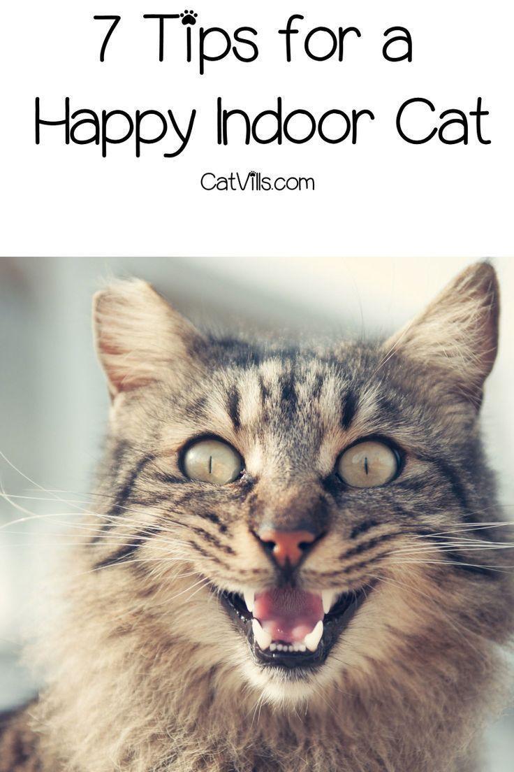 7 Tips For A Happy Indoor Cat Indoor Cat Cat Behavior Cat Training