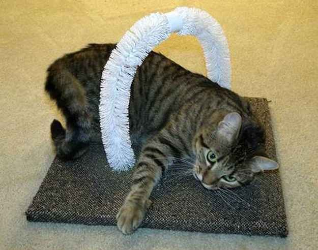 Let your cats scratch themselves with this DIY self-petting station made with toilet bowl brushes.