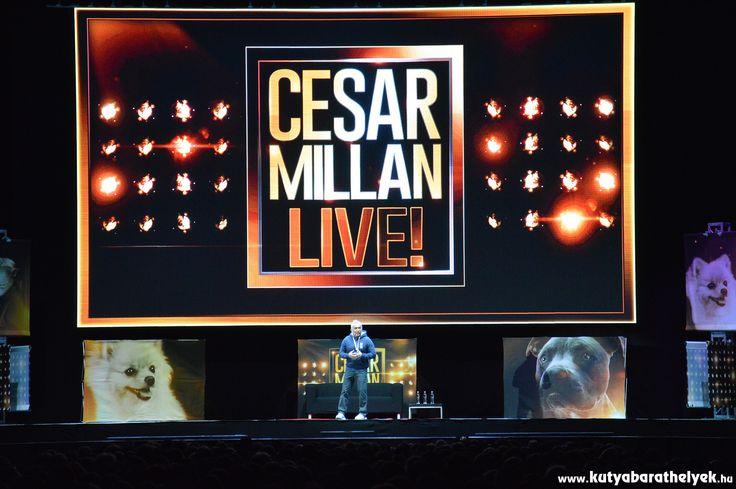 Megtelt szombat este a budapesti Papp László Sportaréna - első ízben érkezett  Magyarországra a Csodálatos Kutyadoki, Cesar Millan élő showjával! Mi is ott voltunk a Cesar Millan Live-on!  #kutya #dog #cesarmillanlive #kutyabaráthelyek