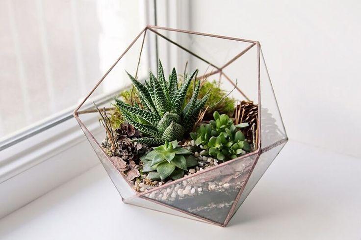 Decoração - Cactos e suculentas no vaso de vidro triangular.