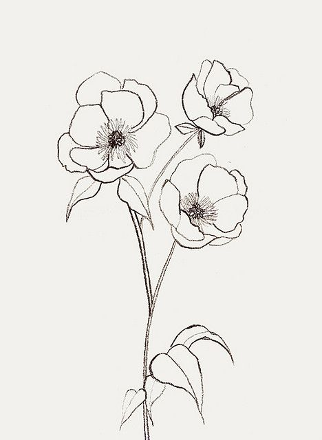 Line Drawing Flower Tattoo : Best flower drawings ideas on pinterest
