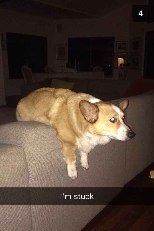 For public humiliation.   32 Pics That Prove Every Pet Owner Should Use Snapchat